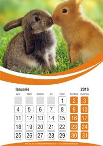 calendare-perete-model-19